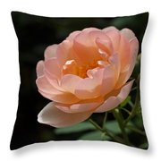 Rose Blush Throw Pillow by Rona Black
