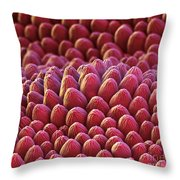 Rose Petal Surface Sem Throw Pillow by Eye of Science