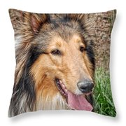 Rough Collie Throw Pillow by Kenny Francis