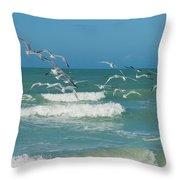 Royal Tern Frenzy Throw Pillow by Kim Hojnacki