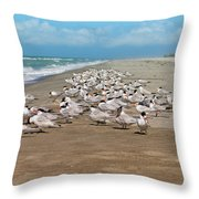 Royal Terns On The Beach Throw Pillow by Kim Hojnacki