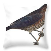 Rusty Blackbird  Throw Pillow by Anonymous