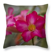 Sabi Star - Desert Rose Garden Of Dreams Hawaii Throw Pillow by Sharon Mau