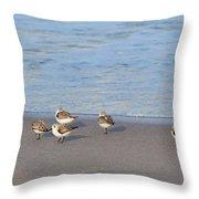 Sandpiper Siesta Throw Pillow by Michelle Wiarda