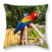 Scarlet Macaw Throw Pillow by John Bailey