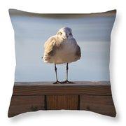 Seagull With An Attitude  Throw Pillow by Mike McGlothlen