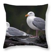 Seagulls Throw Pillow by Gary Langley