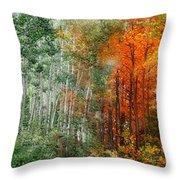 Seasons Of The Aspen Throw Pillow by Carol Cavalaris