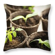 Seedlings  Throw Pillow by Elena Elisseeva