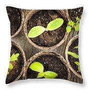 Seedlings Growing In Peat Moss Pots Throw Pillow by Elena Elisseeva