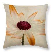 Senetti Pericallis Orange Tip Throw Pillow by John Edwards