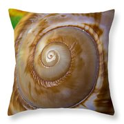 Shell Spiral Throw Pillow by Garry Gay