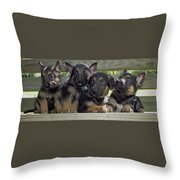 Shepherd Pups 2 Throw Pillow by Aimee L Maher Photography and Art Visit ALMGallerydotcom