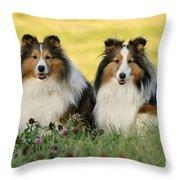 Shetland Sheepdogs Throw Pillow by Rolf Kopfle