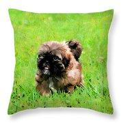 Shih Tzu Puppy Throw Pillow by Darren Fisher