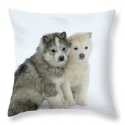 Siberian Husky Puppies Throw Pillow by M. Watson