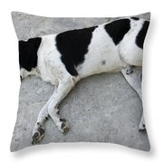 Sleeping Dog Lying On The Ground Throw Pillow by Matthias Hauser