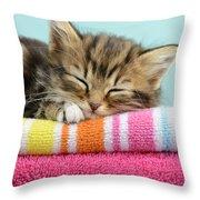 Sleepy Kitten Throw Pillow by Greg Cuddiford