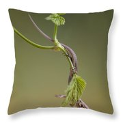 Small Lizard On The Green Branch Throw Pillow by Jaroslaw Blaminsky