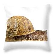 Snail Throw Pillow by Elena Elisseeva