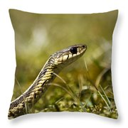 Snake Encounter Close-up Throw Pillow by Christina Rollo