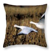 Snow Geese Throw Pillow by Steven Ralser