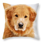 Snowy Golden Retriever Throw Pillow by Christina Rollo