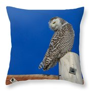 Snowy Owl Throw Pillow by Everet Regal