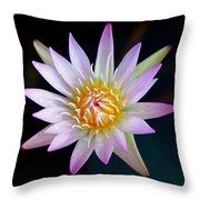 Soft Lullabye Throw Pillow by Karen Wiles
