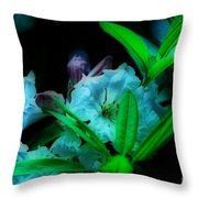Softness Throw Pillow by Cheryl Young