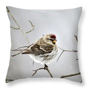 Solitary Redpoll Throw Pillow by Christina Rollo