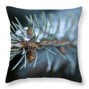 Sparkling Pine Throw Pillow by Darren Fisher