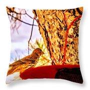 Sparrow Pine Tree Feeder Throw Pillow by Bob and Nadine Johnston
