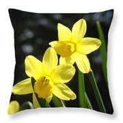 Spring Floral Art Prints Glowing Daffodils Flowers Throw Pillow by Baslee Troutman