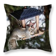 Squirrel On Bird Feeder Throw Pillow by Elena Elisseeva