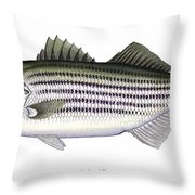 Striped Bass Throw Pillow by Charles Harden
