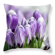 Striped Purple Crocuses In The Snow Throw Pillow by Sharon Talson