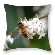 Study Of A Bee Throw Pillow by Maria Urso