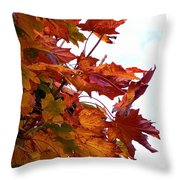 Sugar Maple Study Throw Pillow by Pamela Patch