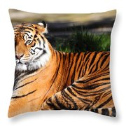 Sumatran Tiger 5D27142 Throw Pillow by Wingsdomain Art and Photography
