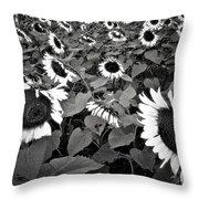 Sun Fam Throw Pillow by Robert McCubbin