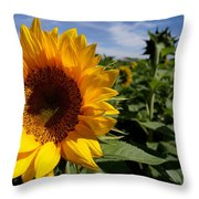 Sunflower Glow Throw Pillow by Kerri Mortenson