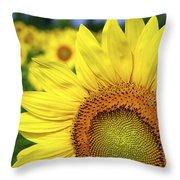 Sunflower In Field Throw Pillow by Elena Elisseeva