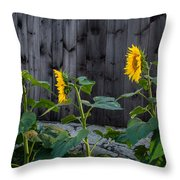 Sunflower Quartet Throw Pillow by Bill  Wakeley