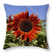 Sunflower Sky Throw Pillow by Kerri Mortenson