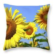 Sunflowers In Field Throw Pillow by Elena Elisseeva
