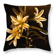 Sunrise Ajo Lily Throw Pillow by Robert Bales