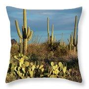 Sunset On The Saguaros Throw Pillow by Sandra Bronstein
