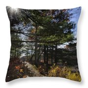 Sunshine Pathway Landscape Throw Pillow by Christina Rollo