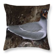 Swallow-tailed Gull And Chick Calling Throw Pillow by Tui De Roy